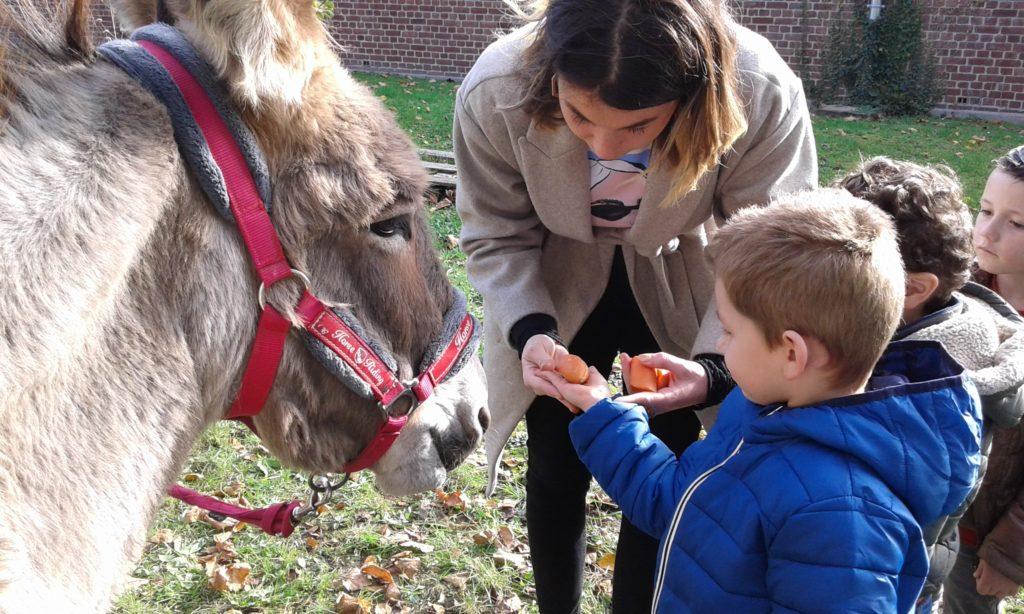 le centre de loisirs prend soin de l'âne
