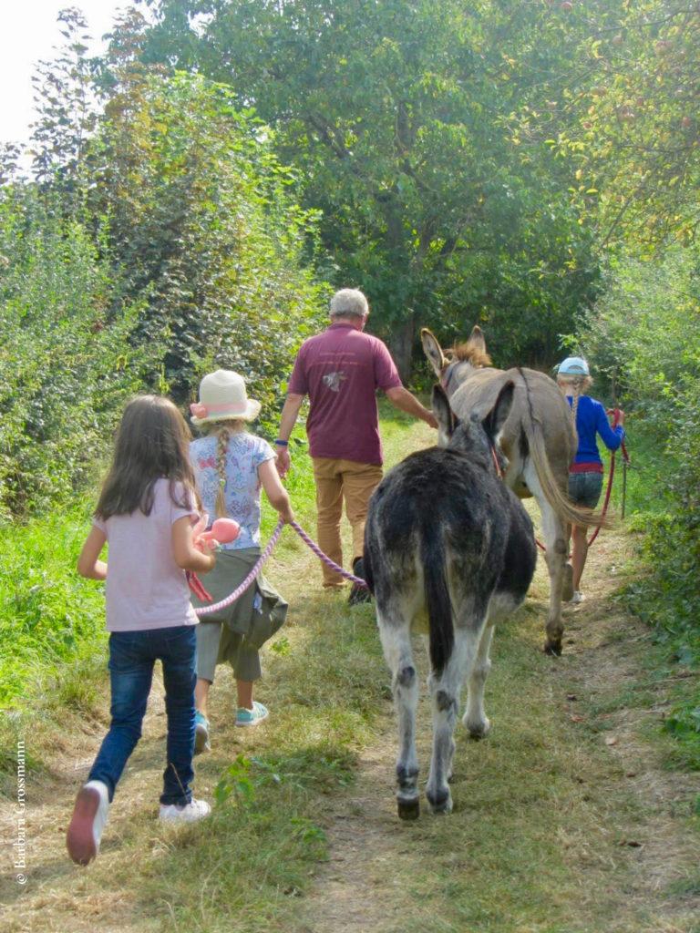 les enfants guident les ânes sur le chemin